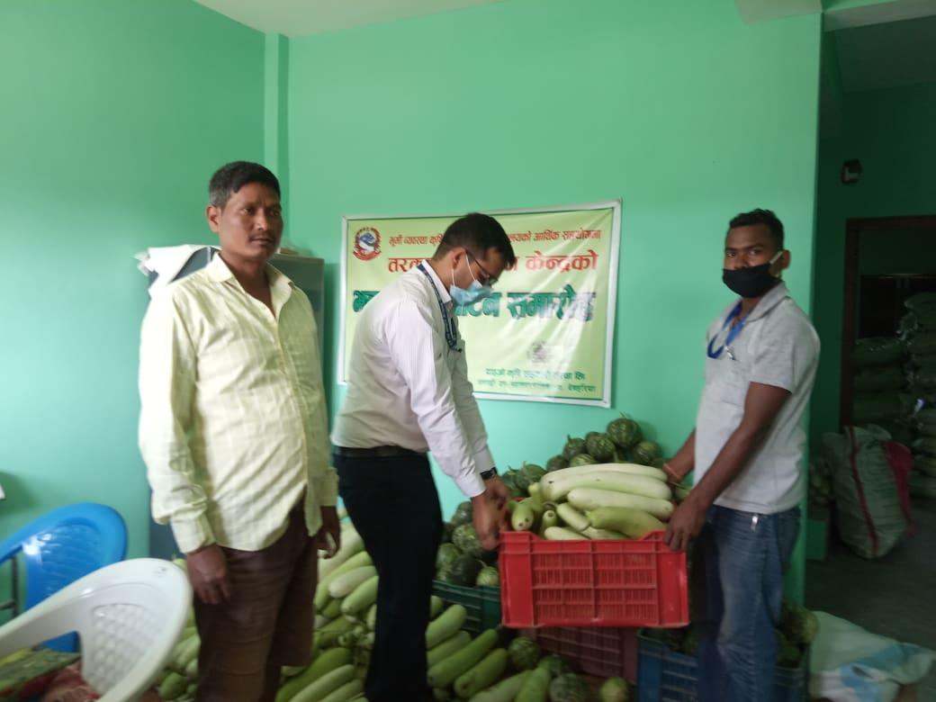 दाइजो कृषि सहकारी संस्थाले बिपन्न परिवारका लागि तरकारी सहयोग